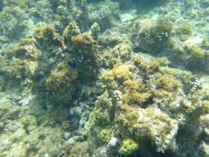 På korallrevet