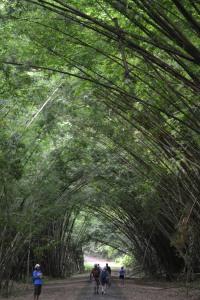 En katedral av bambu