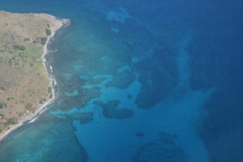Korallrev och gräs på botten