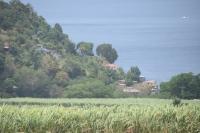 Ett av otaliga sockerrörsfält
