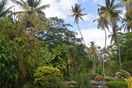 TOBAGO palmer (2)